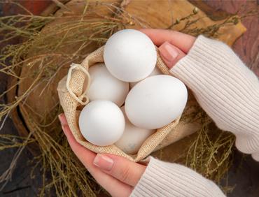 produzione uova lecce